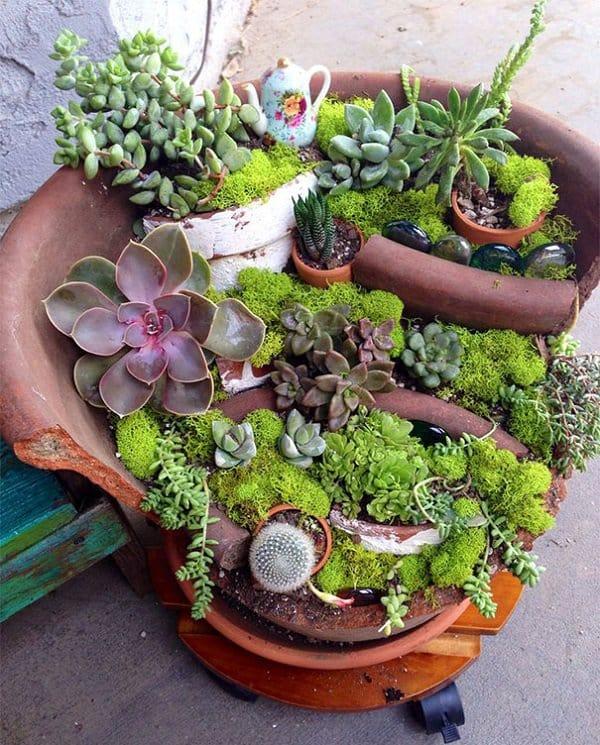 diy fairy garden cactus