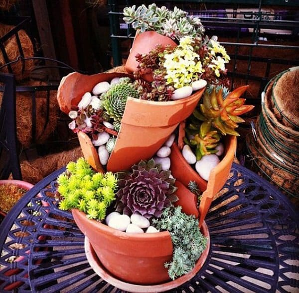 diy fairy garden plants