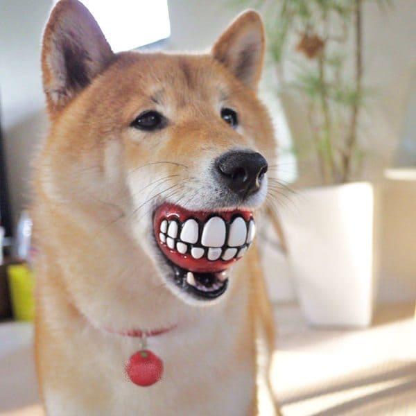 dog-gifts-2