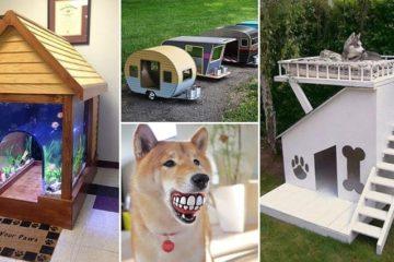 dog-gifts
