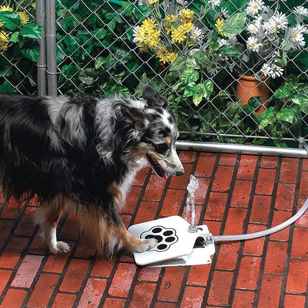 dog-gifts-6