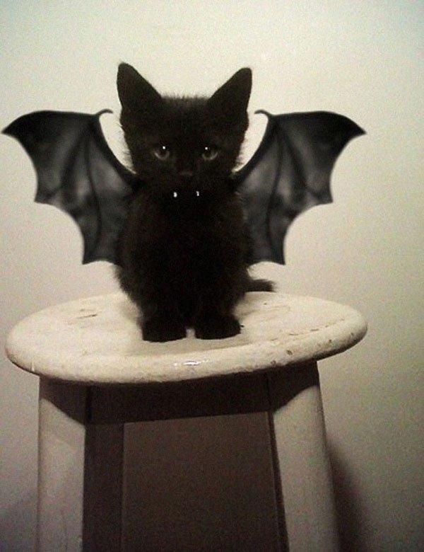 pet-halloween-costume-1