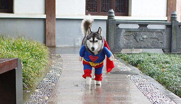 pet-halloween-costume-10