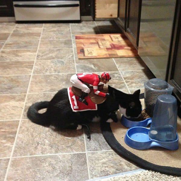 pet-halloween-costume-11