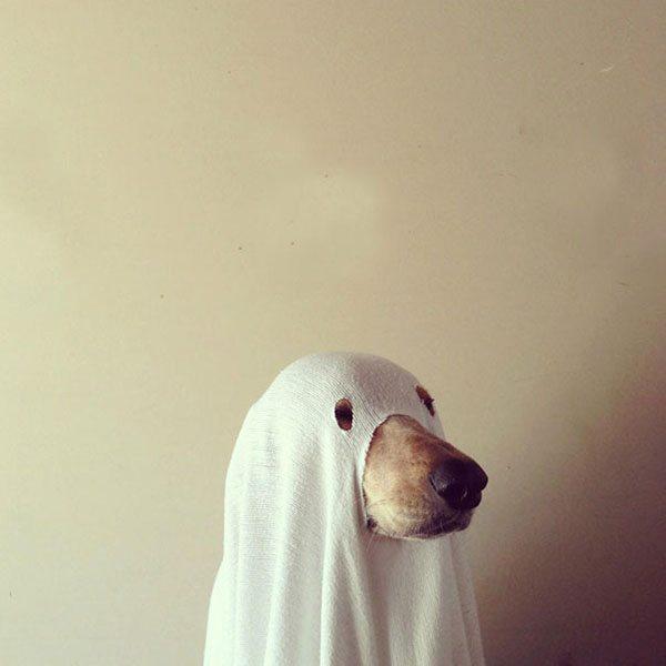pet-halloween-costume-15