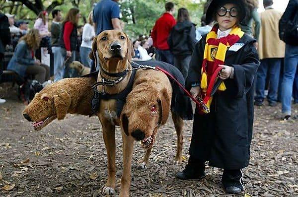 pet-halloween-costume-16
