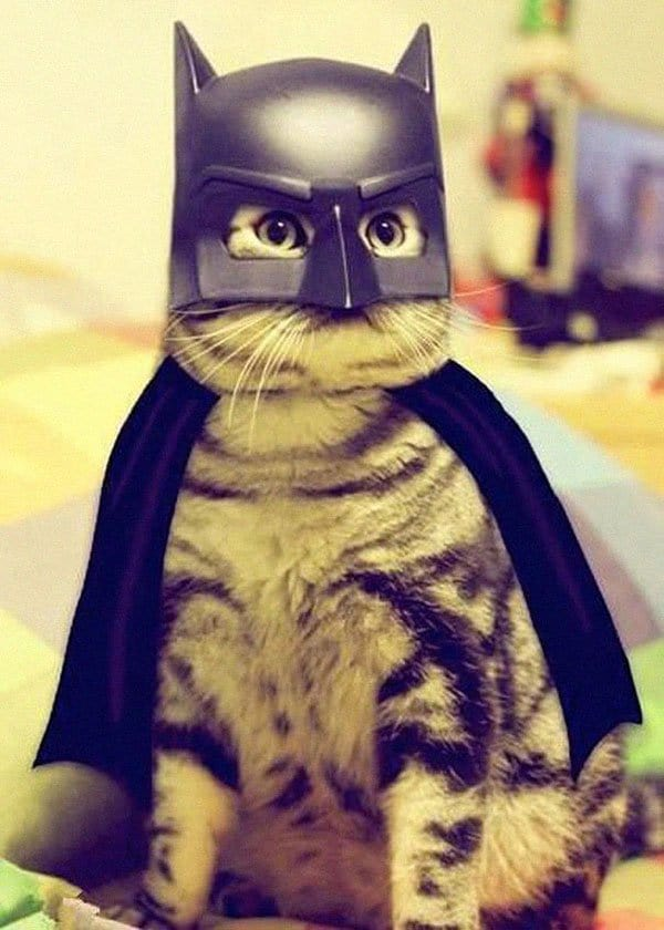 pet-halloween-costume-18 & Awesome Halloween Costumes For Pets