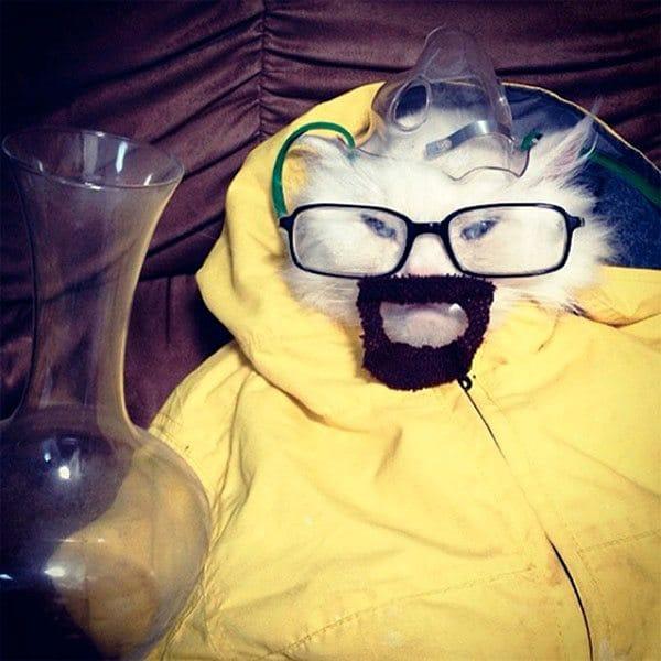 pet-halloween-costume-23