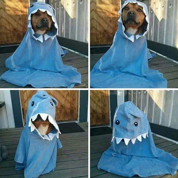 pet-halloween-costume-25