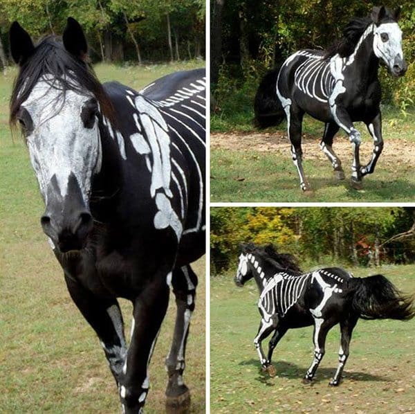 pet-halloween-costume-3
