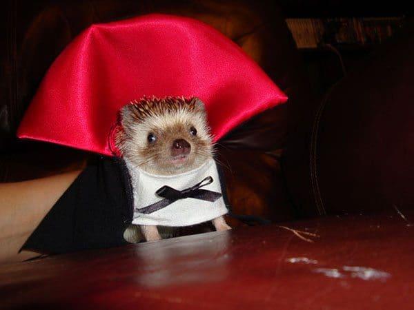 pet-halloween-costume-4