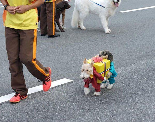 pet-halloween-costume-5