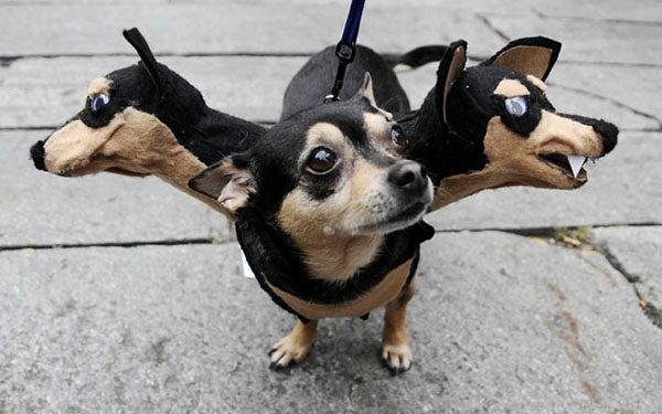 pet-halloween-costume-6 & Awesome Halloween Costumes For Pets