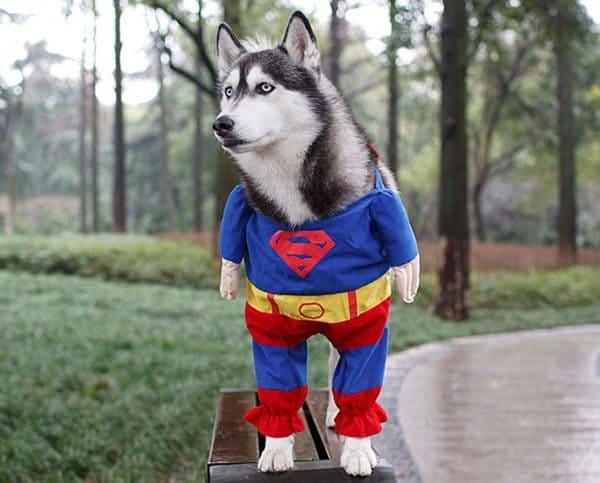 pet-halloween-costume-9