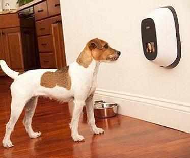 pet videophone