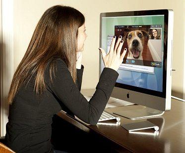 pet videophone call