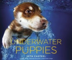 underwater puppies photo book
