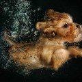 underwater puppies photo book brown dog
