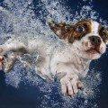 underwater puppies photo book white dog