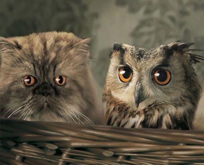 Owl Tumblr 20 Cats That Freakishl...