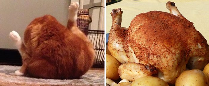 Cat looks like roast chicken