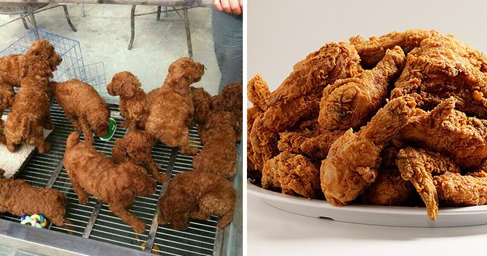 Fried chicken lookalike puppies