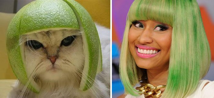 Nicky Minaj cat lookalike