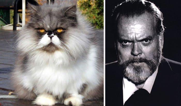 Orson Welles cat