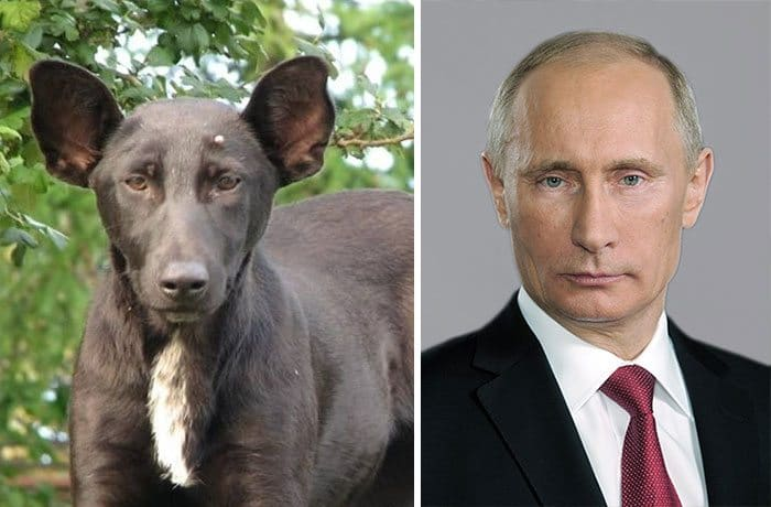 Vladimir Putin dog lookalike