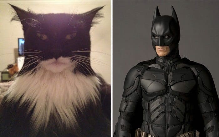 cat batman