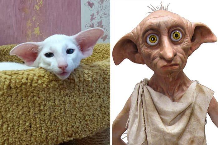 cat looks like dobby