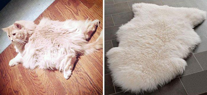 cat-looks-like-rug