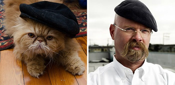 cat mythbusters