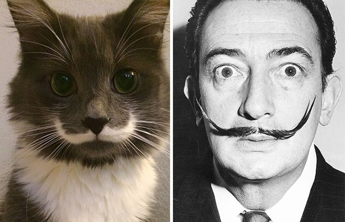 cat salvador dali
