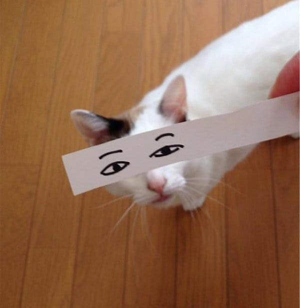 cat with drawn eyes