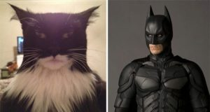 cats that look like other things