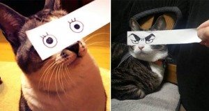 cats with funny eyes