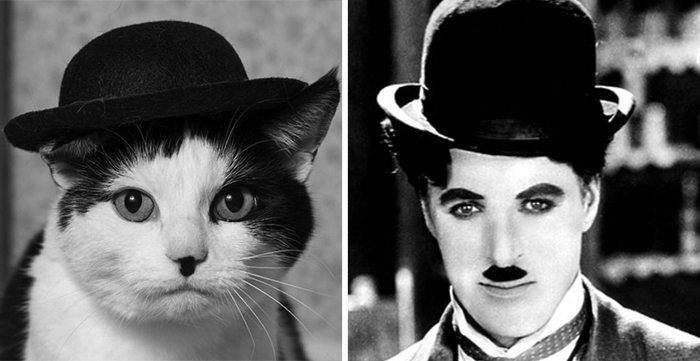 charlie chaplin cat