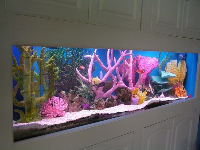 how to make a little aquarium