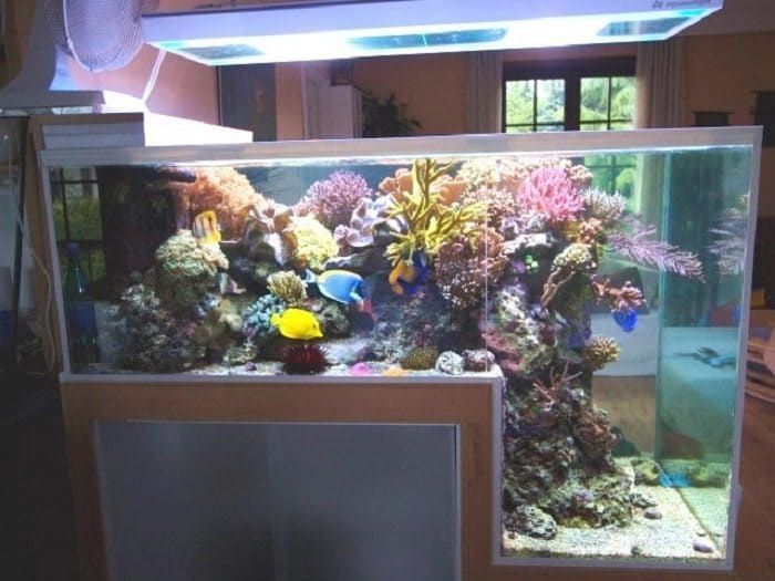 25 awesome aquariums you wish you owned for Waterfall fish tank
