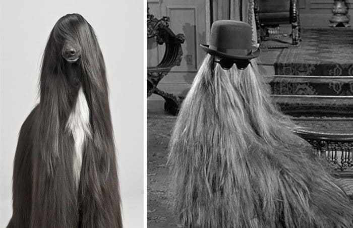 cousin itt dog