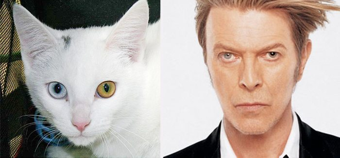 david bowie cat