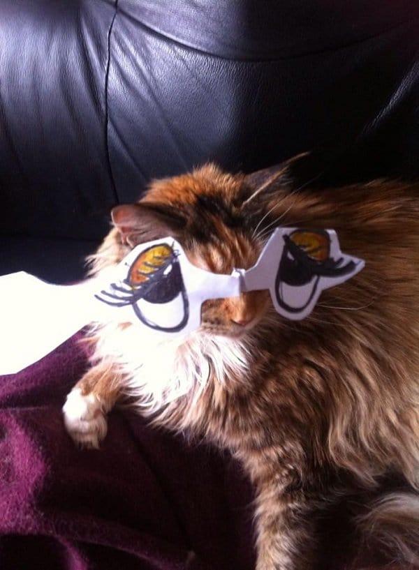 groovy eyed cat