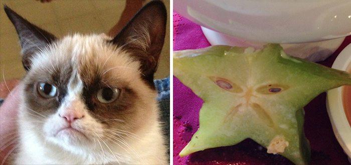 grumpy starfruit cat