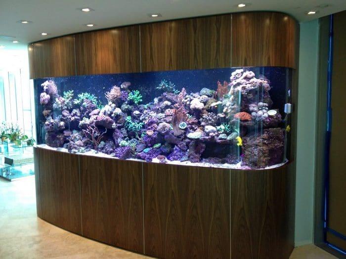 hallway aquarium