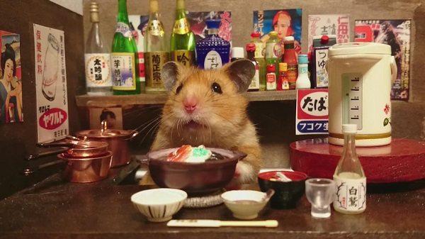 Adorable hamster bartender