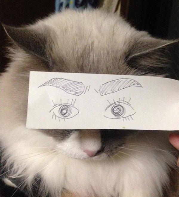 human eyed cat