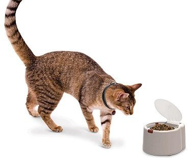 microchip activated pet feeder cat