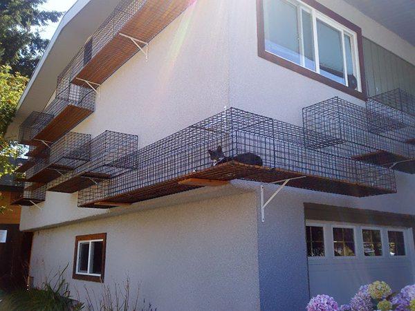 outdoor cat walk