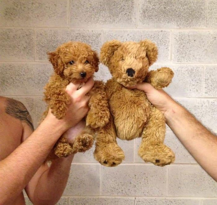 pup and teddy twins